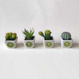 plantje in potje